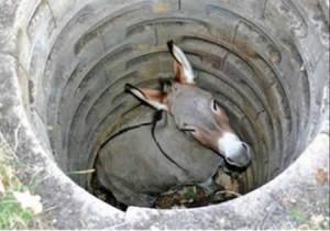井戸に落ちたロバ